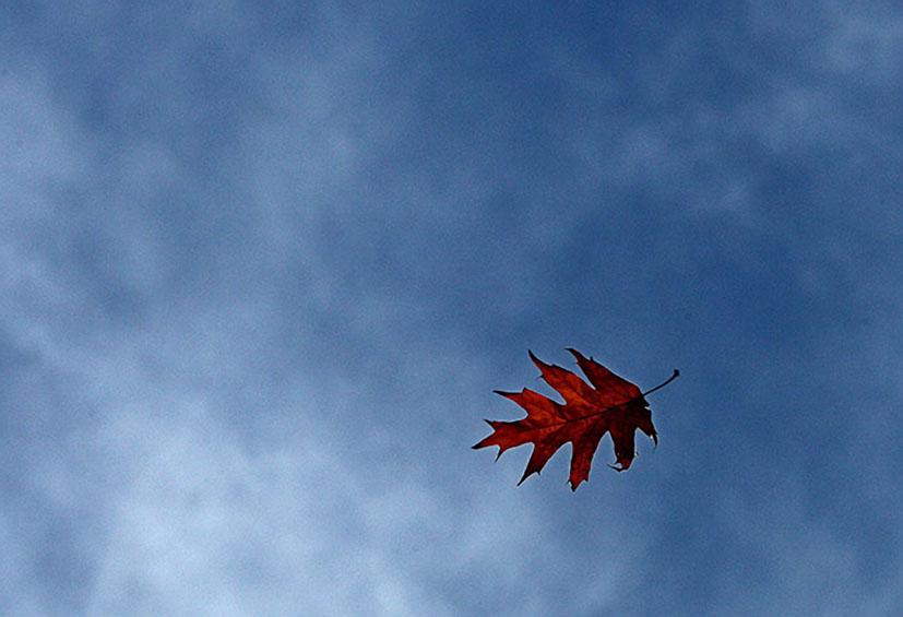 windblown-leaf.jpg