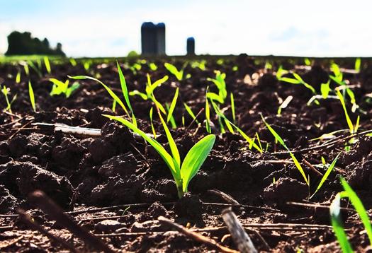 Psalm 52 a most bountiful harvest yedid nefesh for Fertile soil 07