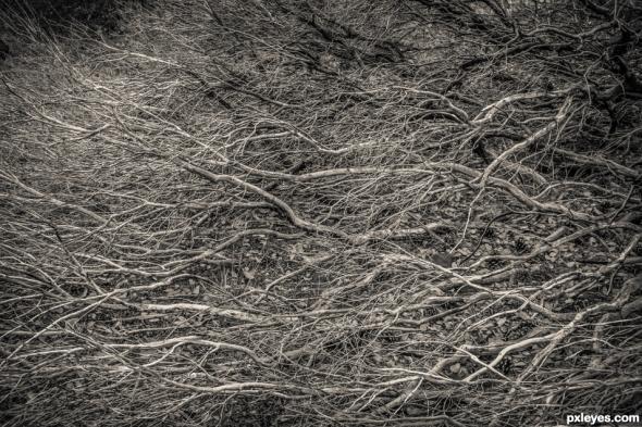 dead-plants-524ba54043dd4