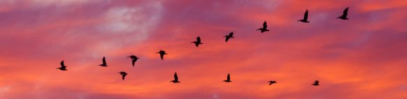 iStock-bird-migration-e1490104794239