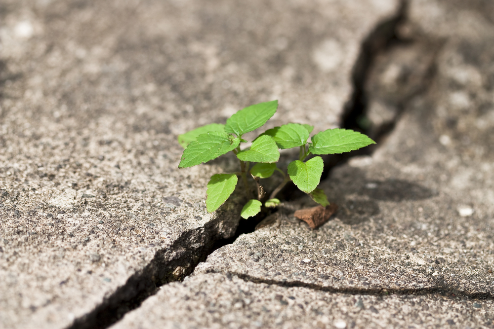 weed-growing-crack_shutterstock_60868711